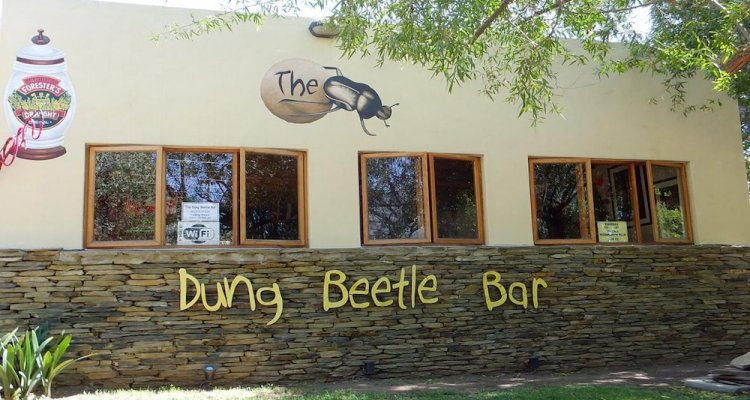 Barrydale Backpackers and Dung Beetle - Hostel